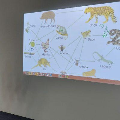 Alunos do 6° ano utilizam lousa digital para identificar níveis tróficos em uma cadeia alimentar